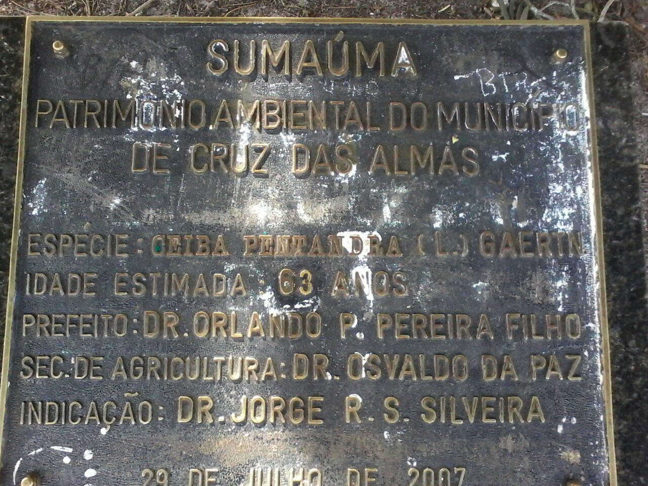 Sumauma3
